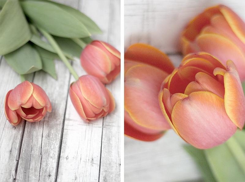 tulipanes - mimos para mamá