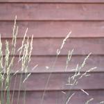 hojitas al viento - Homenaje a Edward Weston - Según quien mire - Once a Day blog