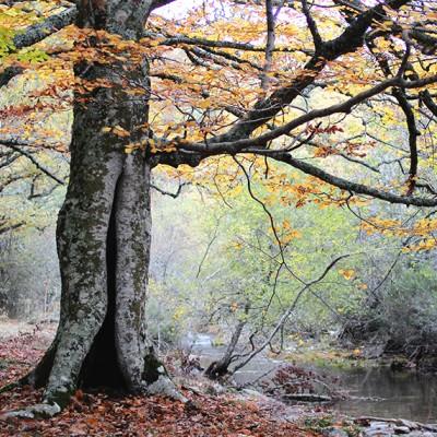 otoño en el Hayedo de Montejo - Once a Day blog