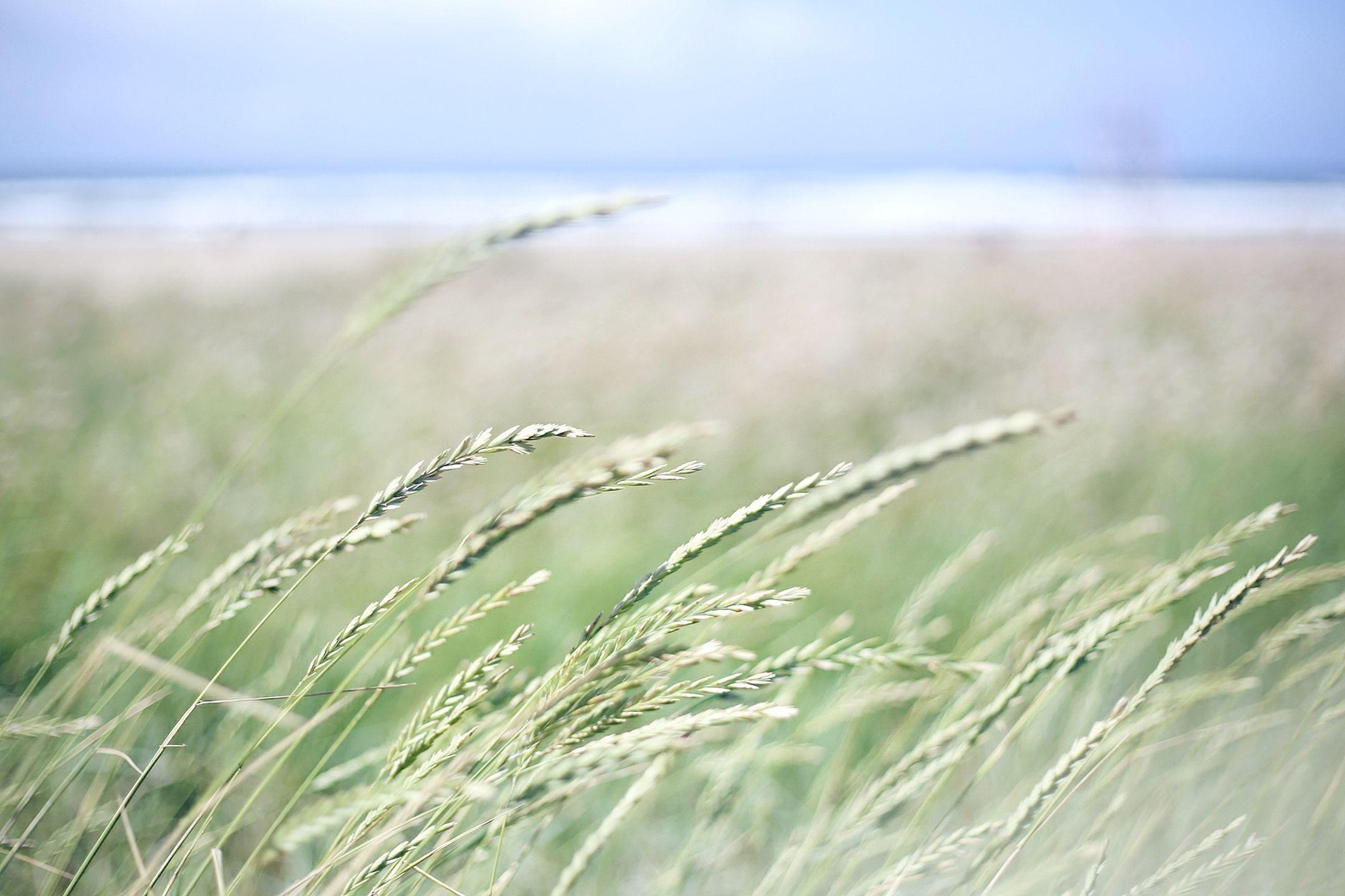 verano-espigas movidas por el viento-Once a Day blog